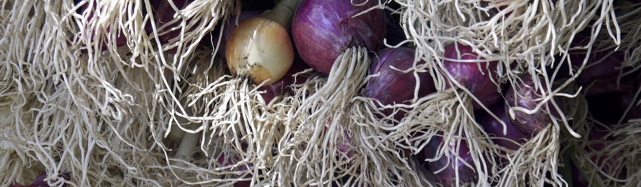 Onions.full