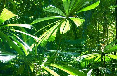 Rainforests.content