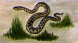 Illustration of an Adder