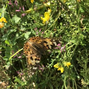 Butterfly enjoying garden.thumb