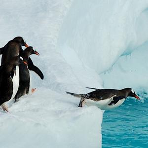 Antarctic.thumb