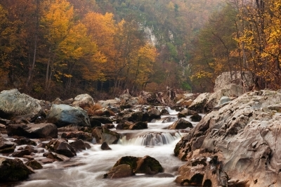 Wild River © Evgeni Dinev Free Digital Photos