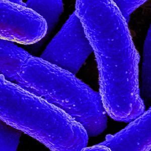 E.coli.thumb