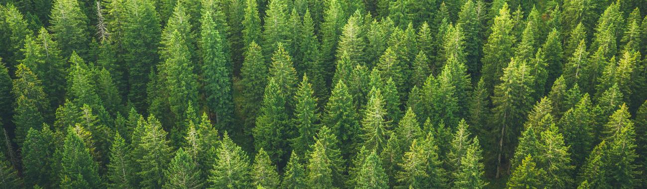 Trees.full