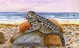 Illustration of a Grey Seal basking