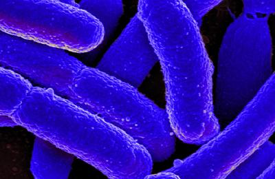 E.coli.content