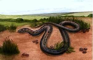 Illustration of a Smooth Snake