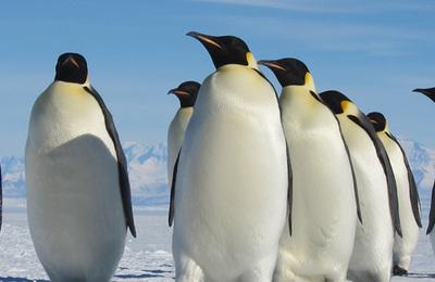 Penguin %28emperor%29.content