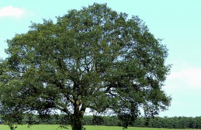 Tree.content