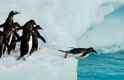 Antarctic.content