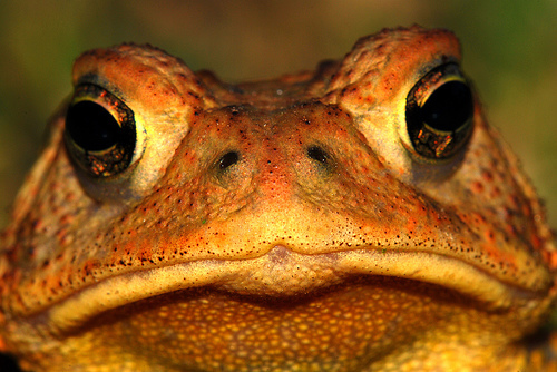 Toad by Mike Keeling - Flickr - CC BY 2.0