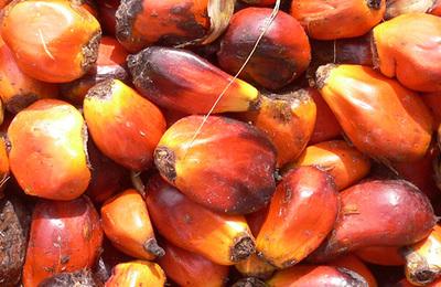 Palm oil.content