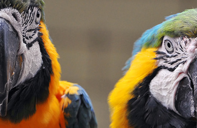 Macaw.content