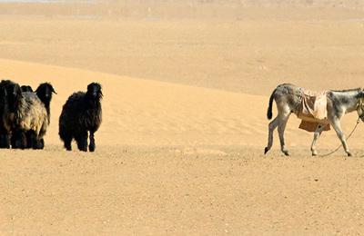 Desert regions.content