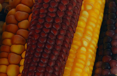 Genetically modified foods.content