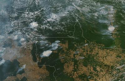 Rainforestfires.content