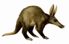 Aardvark - Flickr - John Goodman © CC BY 2.0