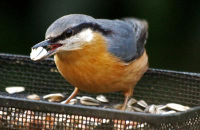 Feeding garden birds.content