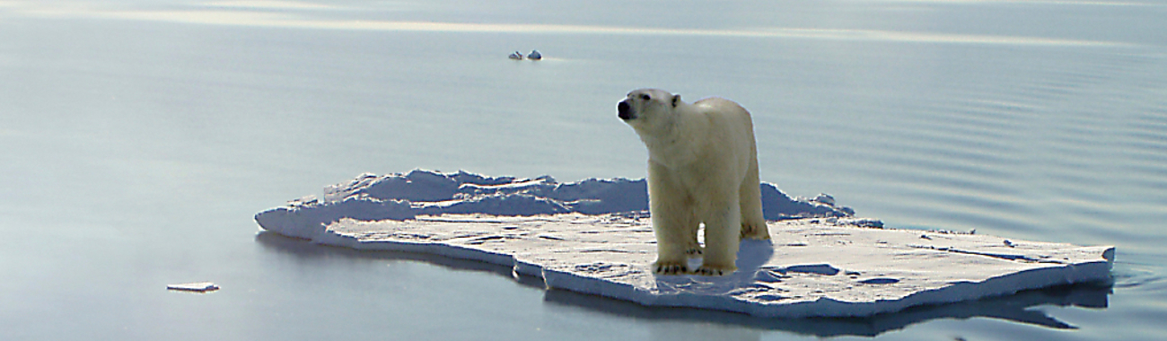 Polarbear.full