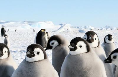 Antarctica.content