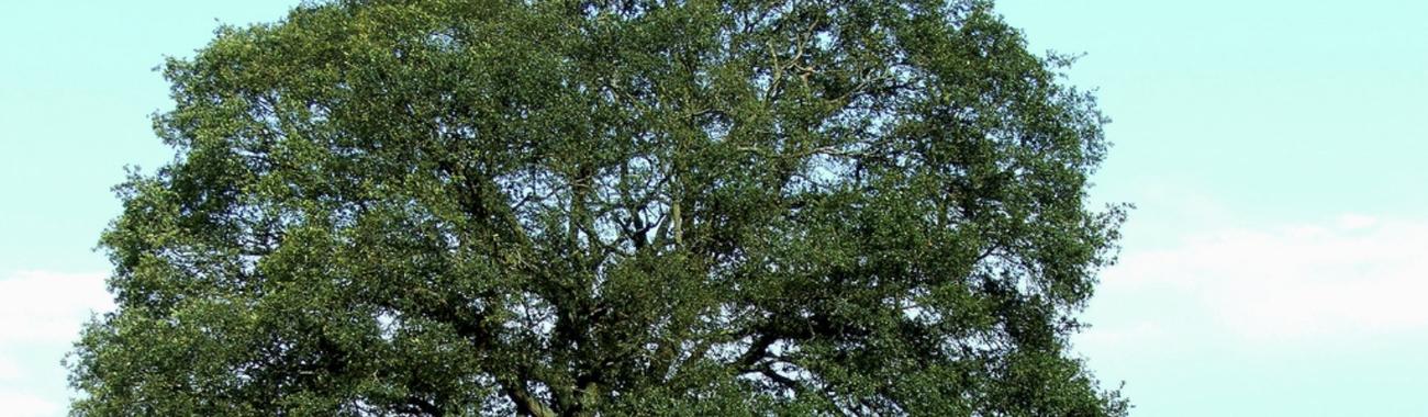 Tree.full