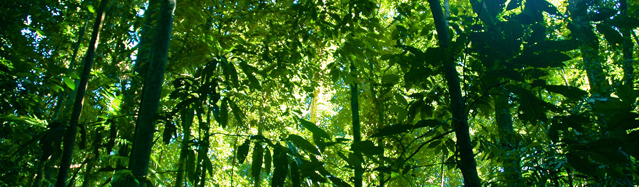 an overview of rainforests and their significance in our ecosystem Unesco – eolss sample chapters tropical biology and conservation management – vol ii - impact of humanity on tropical ecosystems: an overview - oswaldo marçal júnior ©encyclopedia of life support systems (eolss) since remote times, human species changed the environment to meet their needs.