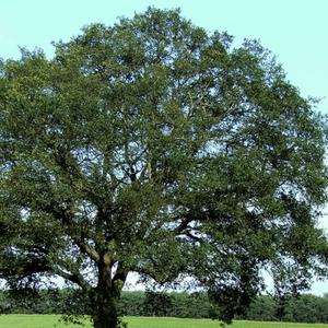 Tree.thumb