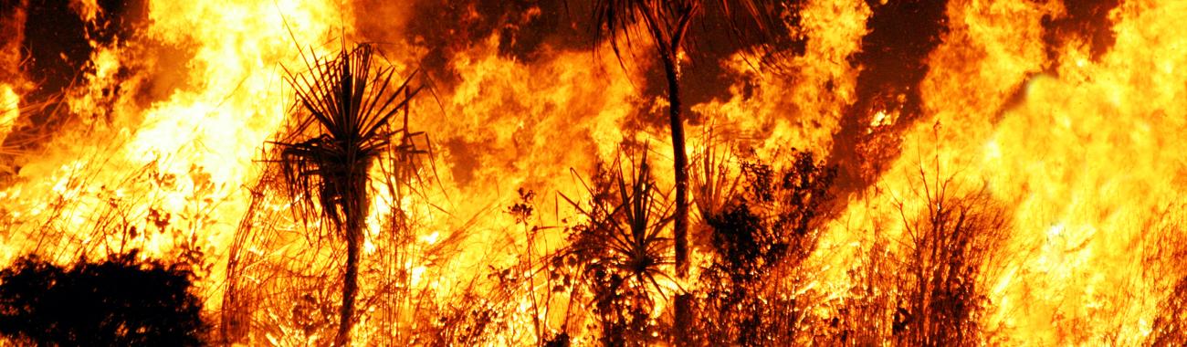 Bushfire.full