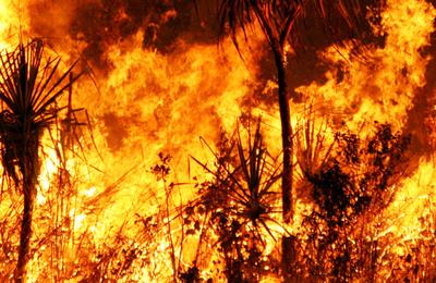 Bushfire.content