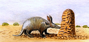 An aardvark eating