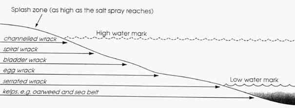 Splash zone diagram