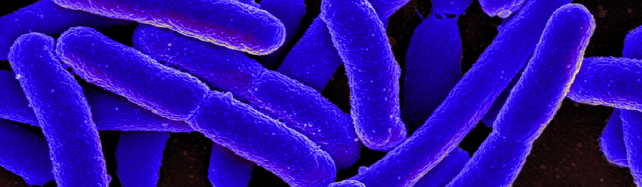 E.coli.full