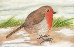 Illustration of a Robin in winter