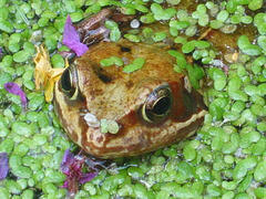 Frog © noodlemaps CC BY 2.0