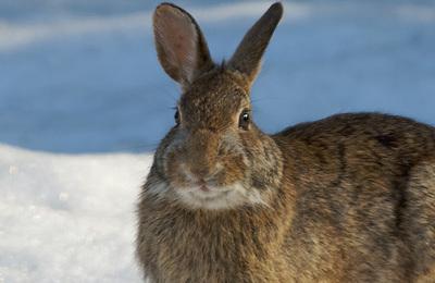 Rabbit.content