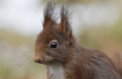 Redsquirrel.content