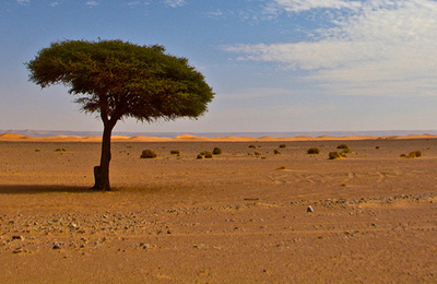 Desertification.content