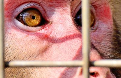 Vivisection.content