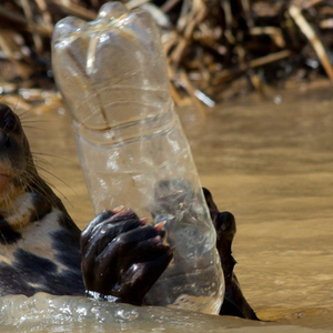 Otterbottle.thumb